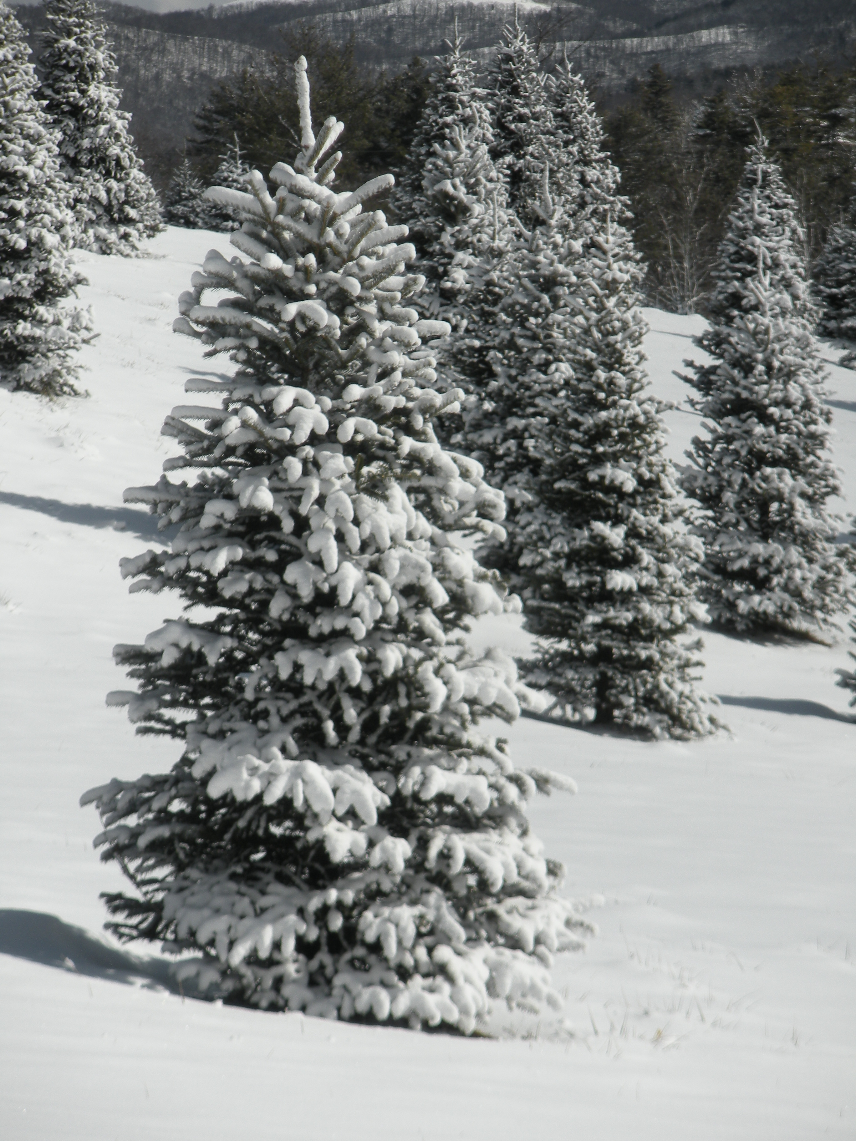 Tree Prices | Ty-Lyn Plantation